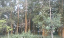 Hutan Akasia
